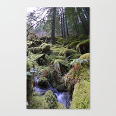 Land of Moss & Water Canvas Print