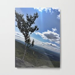 Mountaintop Birch (1) Metal Print
