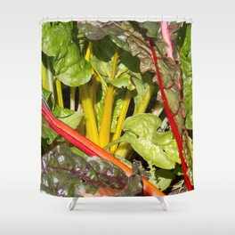 Rhubarb stems and leaves Shower Curtain