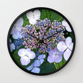 Lacecap Hydrangea Wall Clock