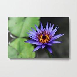 Lily Bee Metal Print