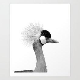 Exotic Crowned Crane Art Print
