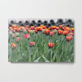 Canons & Tulips Metal Print