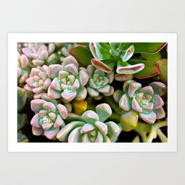 Dewy Delights Art Print