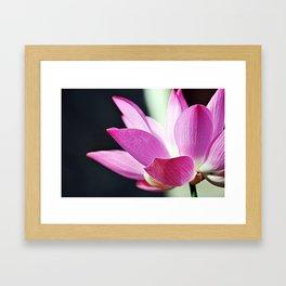 Flower Detail Framed Art Print