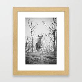 Deer (black & white) Framed Art Print