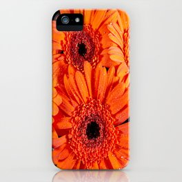 Orange Gerber Daisies iPhone Case