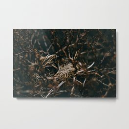 After The Snow Lifted Metal Print