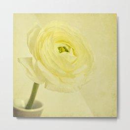 buttery buttercup Metal Print