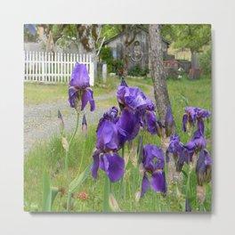 Purdy in Purple... Metal Print