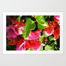 Vibrant pink and red flowers Art Print