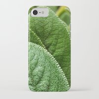 silence of the lambs iPhone & iPod Cases featuring Lambs Ear by Christian Gholson