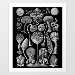 Slime Molds (Mycetozoa) by Ernst Haeckel Art Print