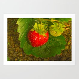 Garden strawberries in the shadow in a green leaf Art Print