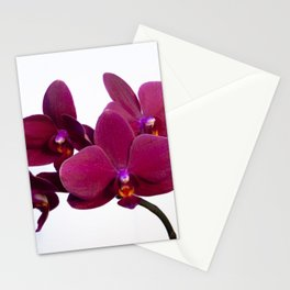 Orchid Flowers 08 Stationery Cards