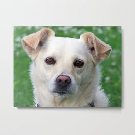 Blond dog portrait Metal Print