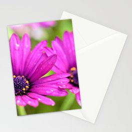 Morning Dew on Purple Daisies by Reay of Light Photography Stationery Cards