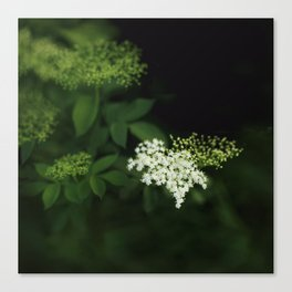 A bunch of lonesome flowers Canvas Print