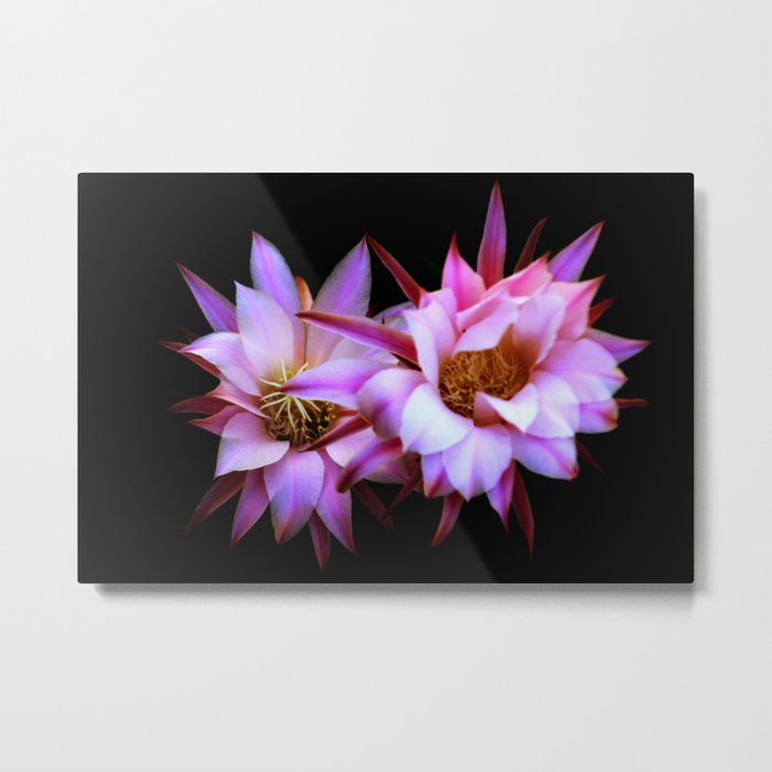 Purple cactus blossom Metal Print