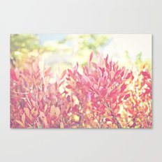 Burst of Red Canvas Print