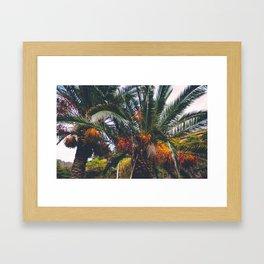 Excotic plants Framed Art Print
