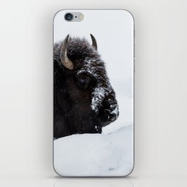 One cold bison iPhone Skin
