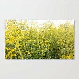 Yellow Goldenrod Canvas Print
