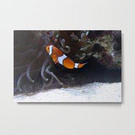 Sea Word Clownfish Metal Print