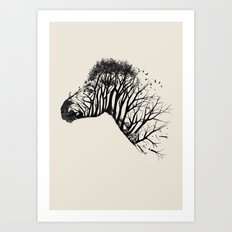 Wild Zebra Art Print