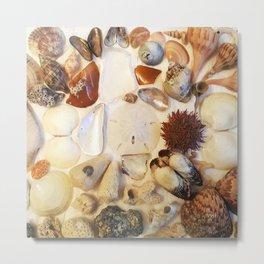 Urchin with Sea Glass and Sand Dollar Metal Print