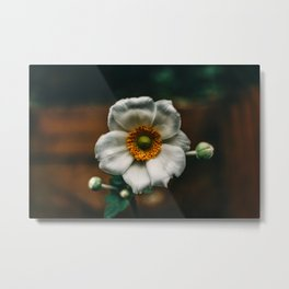 Bright White Flowers with Bulbs Ready to Bloom Metal Print