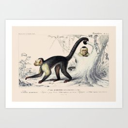 Vintage Capuchin Monkeys Art Print