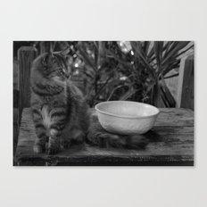 Feral Cat Canvas Print