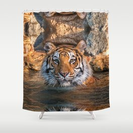 Sheba in the Pool Shower Curtain