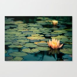 Celladora Canvas Print