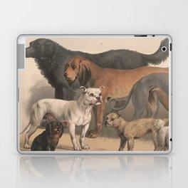 Vintage Dog Breeds Illustration (1874) Laptop & iPad Skin