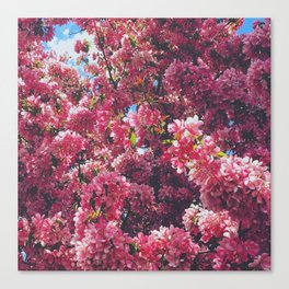 Bloomed 2 Canvas Print