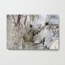 European Beech Tree Trunk Metal Print