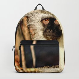 Cute Vervet Monkey in the Wilde Backpack