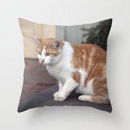 Longwood Gardens - Spring Series 132 Throw Pillow