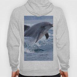 Bottenose dolphin Hoody