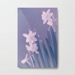 Narcisus Metal Print