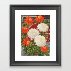 Vintage flower Chrysanthemum Framed Art Print