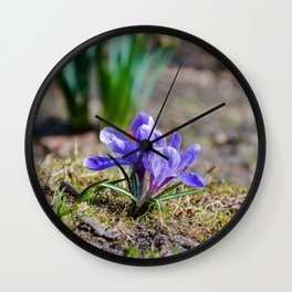 Springtime Crocus in Warsaw Wall Clock