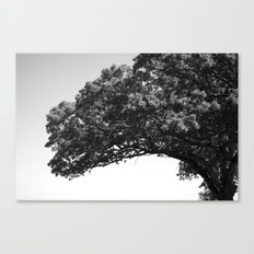 Wis. Canvas Print