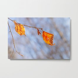 Hazelnut Leaves In The Winter Wind Metal Print