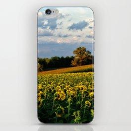 Summer sunflower field iPhone Skin