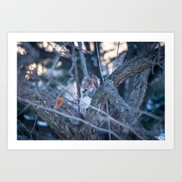 Squirrel eating on sunset during winter Art Print