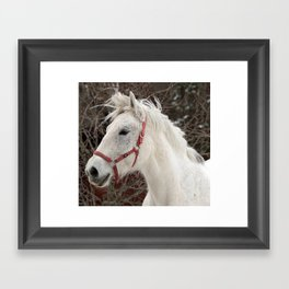 Boris in the wind color Framed Art Print
