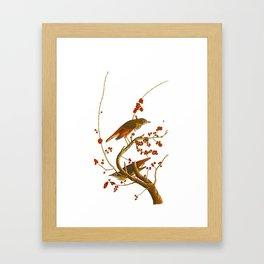 Hermit Thrush Bird Framed Art Print